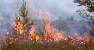 Queda no numero de Incêndios Florestais desde 2011