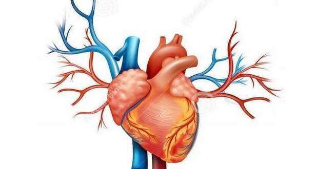 Frequência cardíaca elevada em repouso é fator de risco